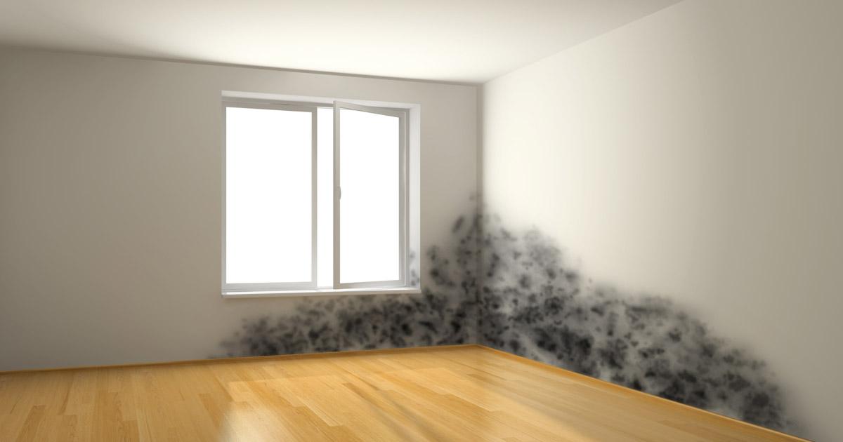 Schimmel An Wänden