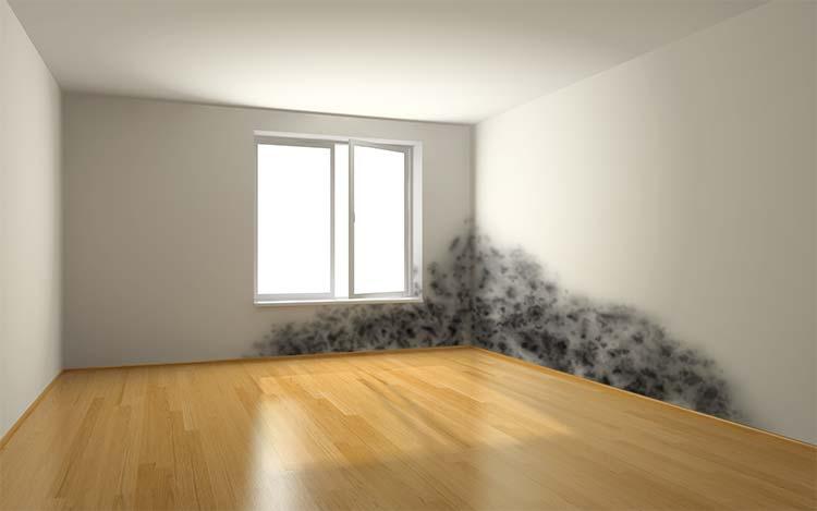 feuchtes mauerwerk schimmel salpeter im keller oder wohnbereich. Black Bedroom Furniture Sets. Home Design Ideas
